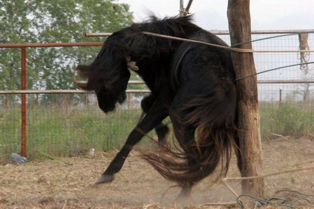 Cum se îmblânzeau caii sălbatici în Delta Dunării