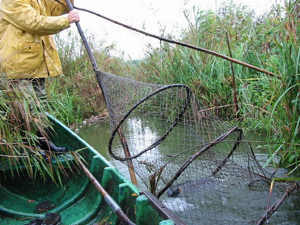 Noi proceduri operaționale de eliberare/vizare a permiselor de pescuit familial/comercial în Rezervația Biosferei Delta Dunării
