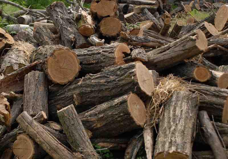 """1.000 de lei pentru un metru cub de lemne. Proastă """"afacere""""!"""
