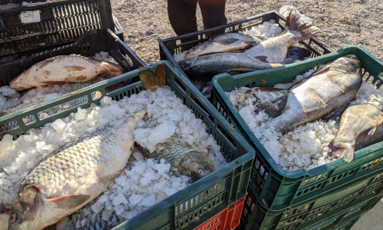 Doi băcăuani au rămas fără peştele pescuit ilegal în Delta Dunării