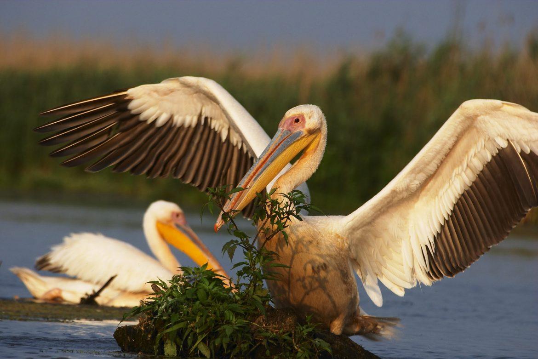 1 aprilie – Ziua Internațională a Păsărilor